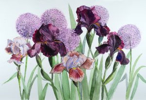 Irises and Alliums 2