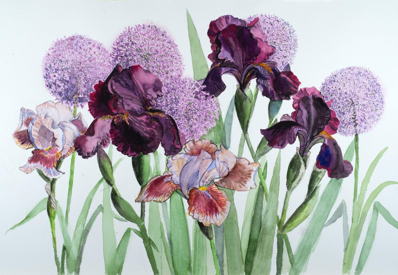 Irises and Alliums 2