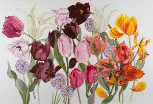 Tulip Varieties